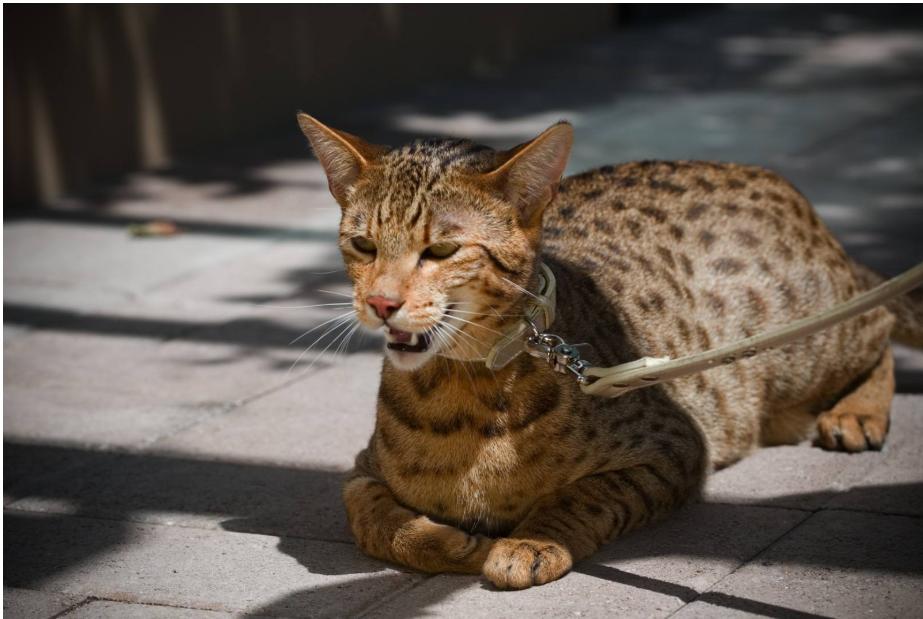 阿瑟拉猫平均寿命能到25岁