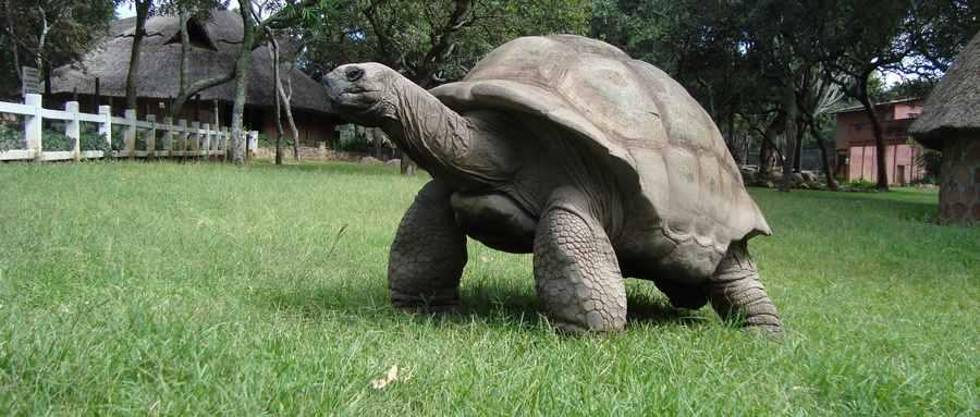 乌龟的寿命