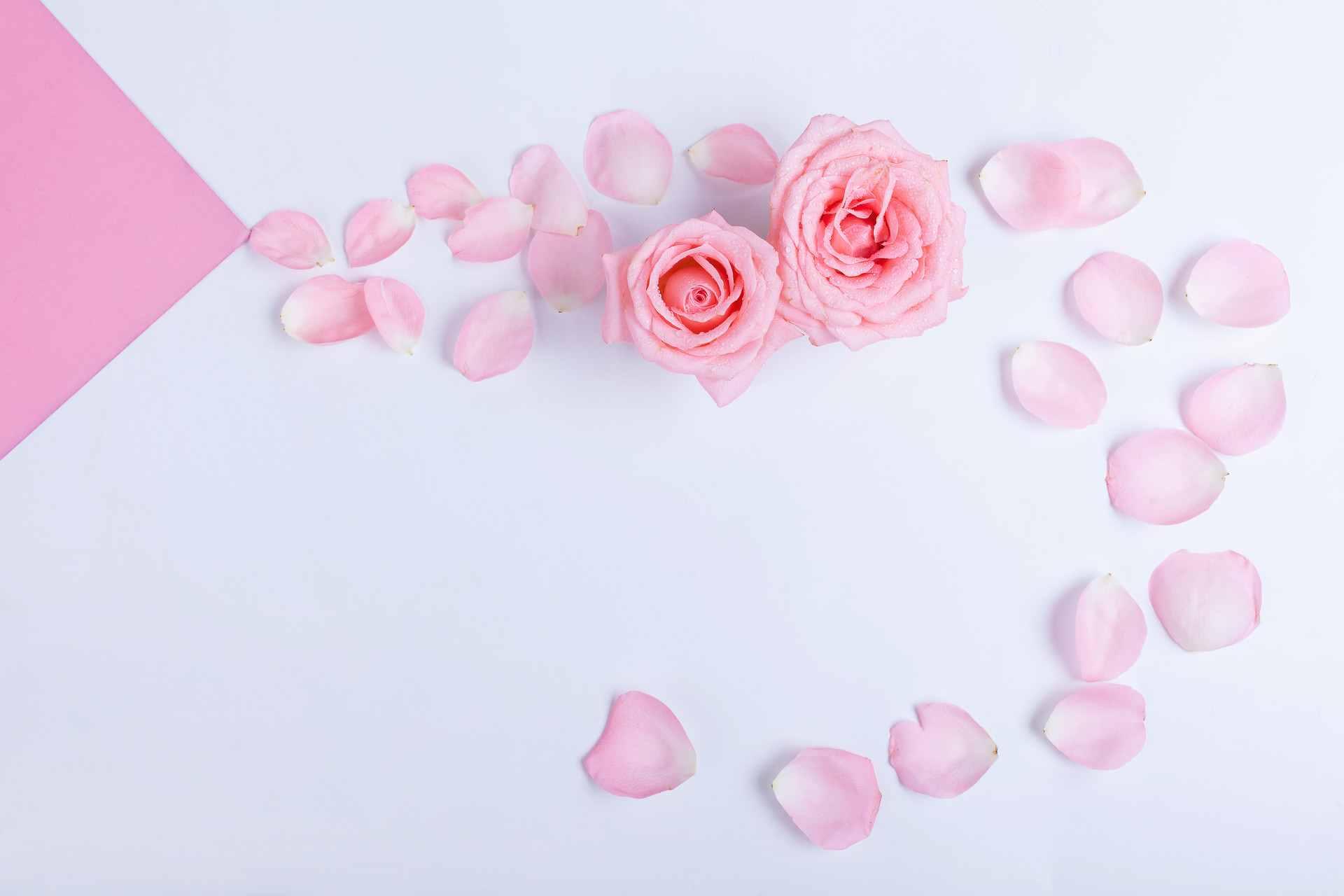 蒲公英的最佳搭配加玫瑰花