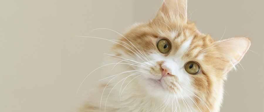 怎么确定猫认主人了