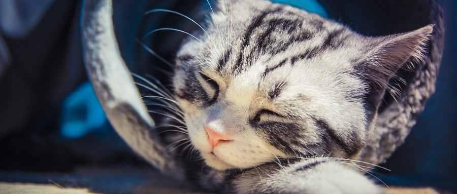 猫对主人的记忆有多久