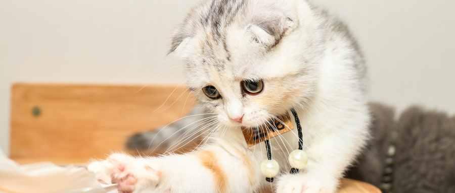 猫为什么那么招人讨厌