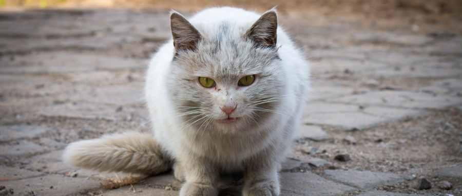 猫把老鼠吃了会不会有事