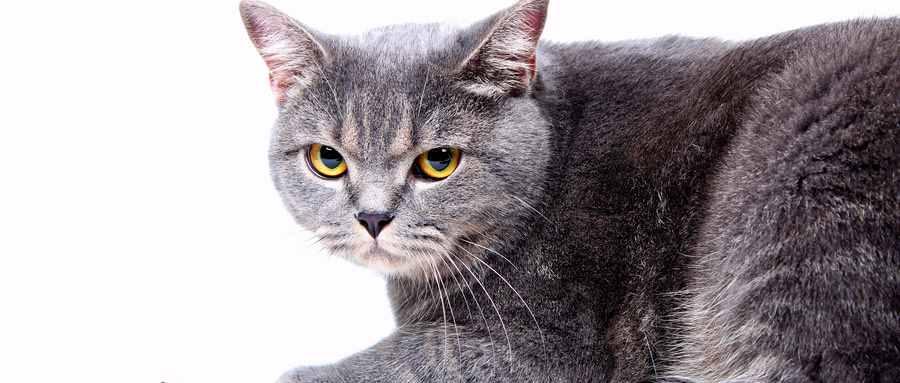 猫为什么要吃老鼠