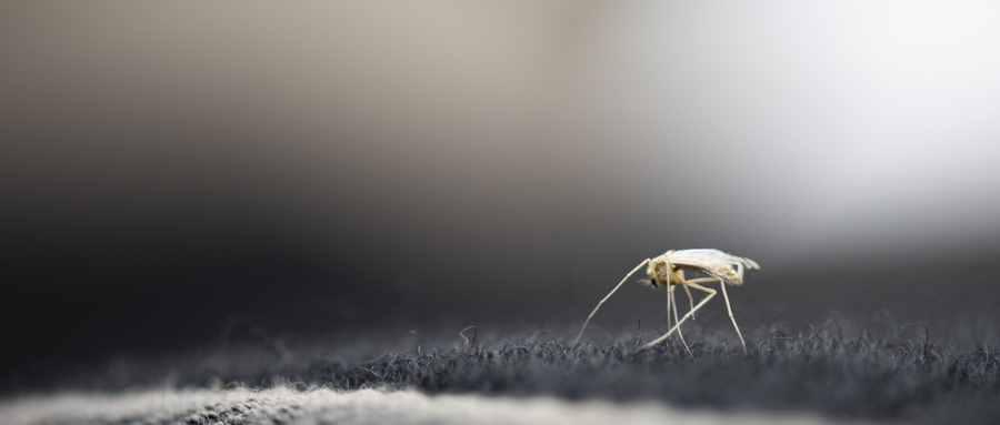 一碗水解决蚊子