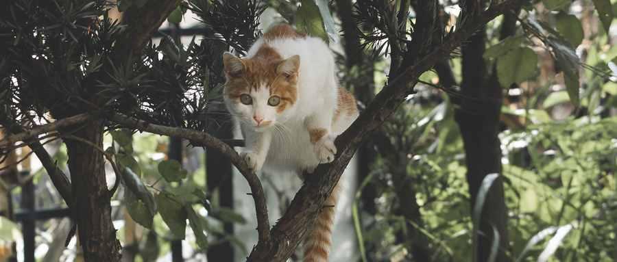 为什么好奇害死猫不是狗
