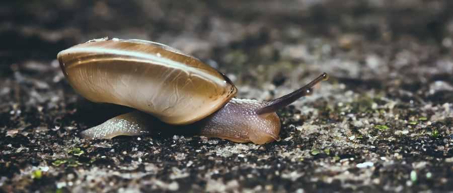 蜗牛不都是慢吞吞的