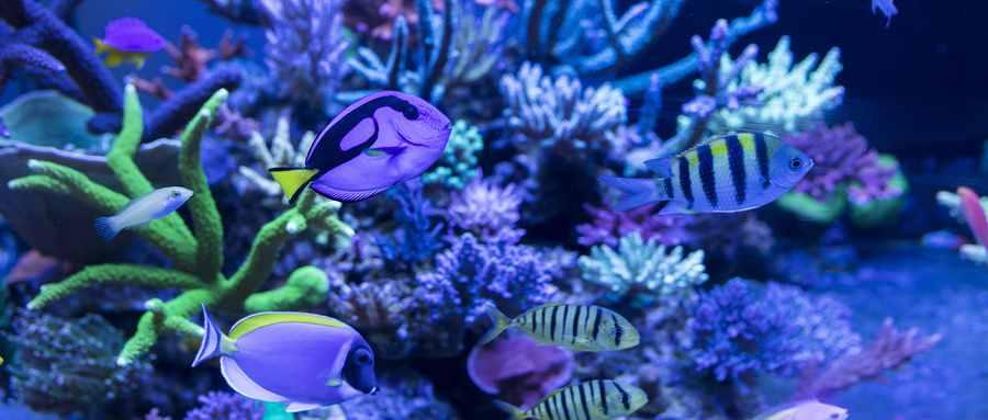 海葵动物还是植物