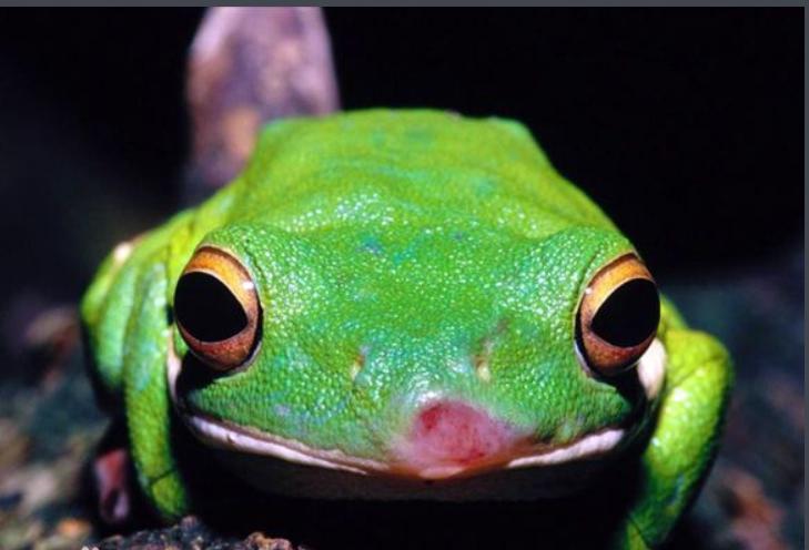 青蛙也吃蛇吗
