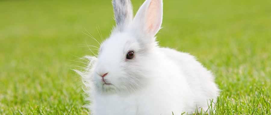 兔子眼睛为什么是红的?