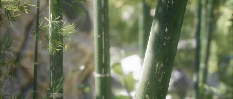 竹子是不是树的一种
