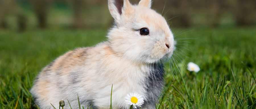 养兔子禁忌-新手怎么养兔子