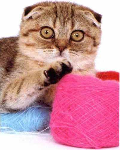 苏格兰折耳猫喜欢干什么
