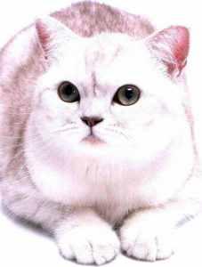 没有经济能力适合养猫吗