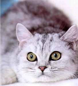 怎么确定是猫毛过敏